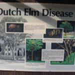 Kildonan Park Dutch Elm Disease Board